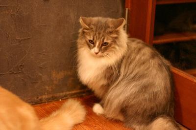 20111117rien328_2